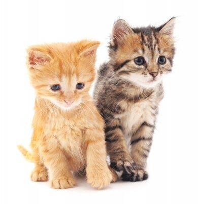 Poster Due gattini.