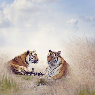 Poster due tigri