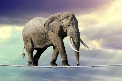 Poster Elefante che cammina su una corda