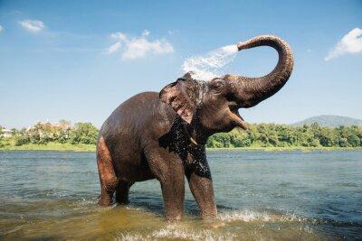 Poster Elefante di lavaggio nel fiume