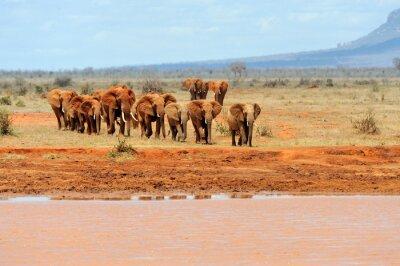 Poster Elefante nel parco nazionale del Kenya