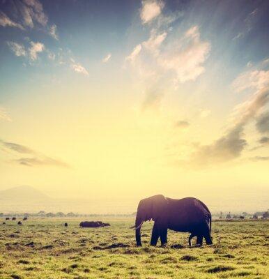 Poster Elefante sulla savana africana al tramonto. Safari in Amboseli, in Kenya, in Africa