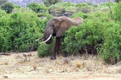 Poster Elefanti africani nella savana