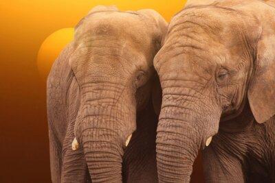 Poster Elefanti Sunrise. Coppia di Elefanti insieme al sorgere del sole.