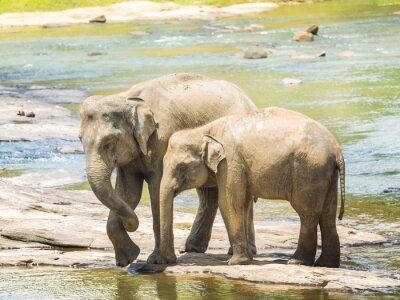 Poster Elephatnts
