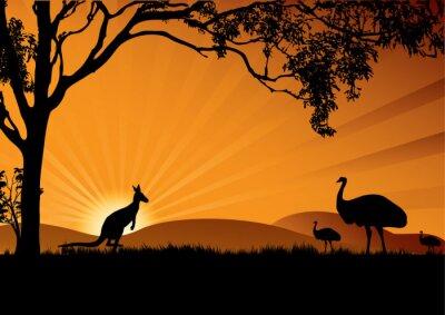 Poster emu canguro tramonto