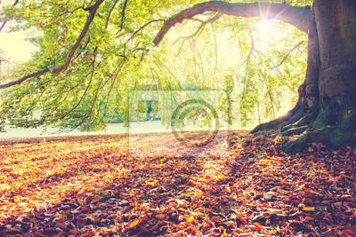 Poster Faggio in autunno