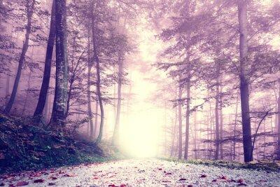 Poster Fantasy colore viola strada nebbiosa foresta. Dreamy fiabesco paesaggio colore foresta.
