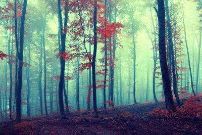 Poster Fantasy foresta di autunno epoca