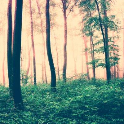 Poster Fantasy scena foresta luce
