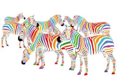 Poster Farbenfrohe Zebre