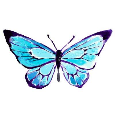 Poster farfalla, disegno acquerello