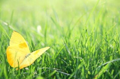 Poster Farfalla gialla in Green Grass Background