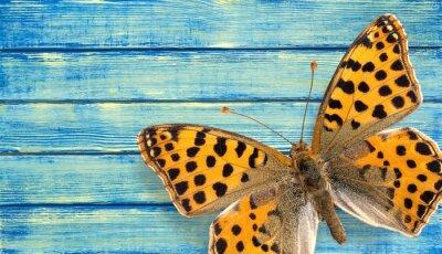 Poster Farfalla, Insetto, Ala.