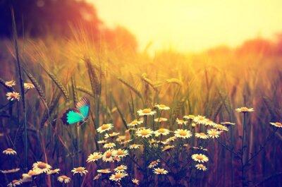 Poster Farfalla volare fiori di primavera prato margherita