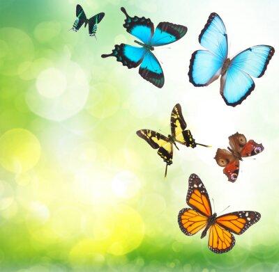 Poster farfalle tropicali in giardino