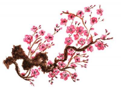 Poster Filiale di fioritura di sakura. Isolato su sfondo bianco