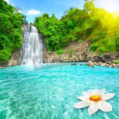 Poster Fiore di loto in piscina a cascata