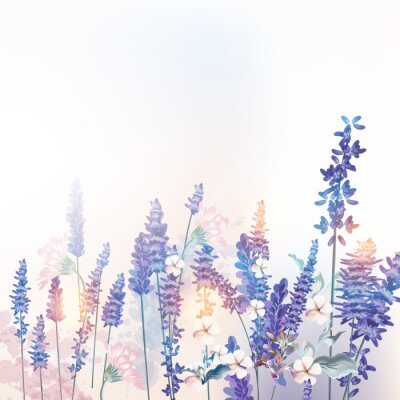 Poster Floral vector spring illustration with field flowers lavender, morning light