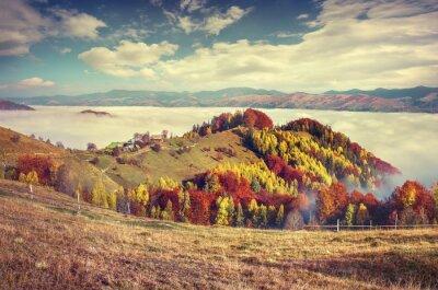 Poster Foggy autunno mattina nelle montagne dei Carpazi.