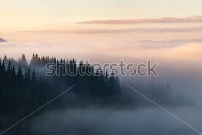 Poster Foresta nelle montagne coperte di nebbia