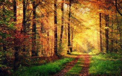 Poster Foresta scenario di autunno con i raggi di luce calda