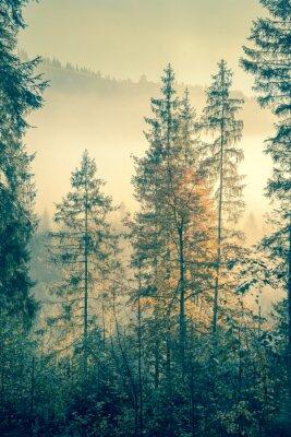 Poster Foresta selvaggia nel tempo autunnale stagione, stile vintage tonica