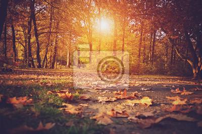 Poster Foto d'epoca del bosco in autunno