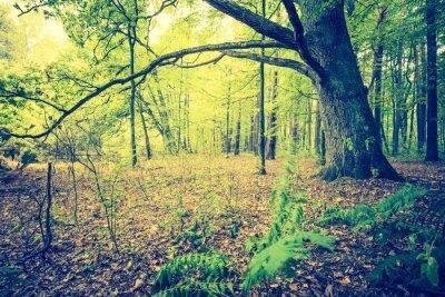 Poster Foto d'epoca del paesaggio bosco autunnale