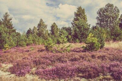 Poster Foto d'epoca di erica nella foresta, paesaggio di campagna.