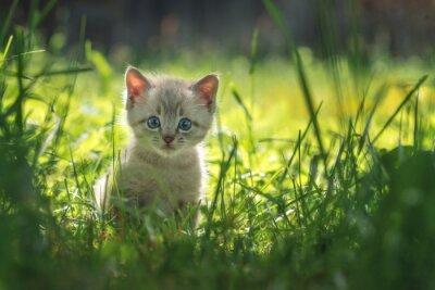 Poster gattino