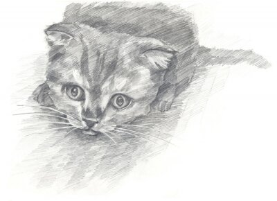 Poster gattino bianco e white.Painted mani. stile grafico.