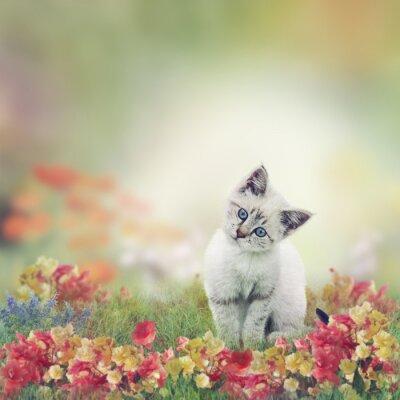 Poster Gattino bianco in fiori
