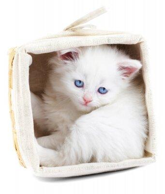 Poster gattino bianco in un cestino.