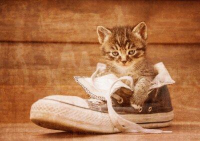 Poster Gattino che si siede in una scarpa, immagine d'epoca