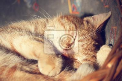 Poster gatto dorme