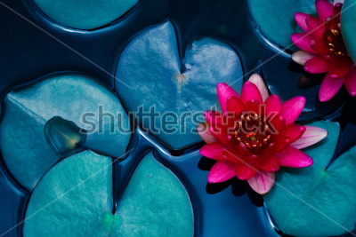 Poster giglio di acqua rossa sul loto che fiorisce sulla superficie dell'acqua e sulle foglie blu scuro tonificate, fondo della natura, pianta acquatica, simbolo di buddismo.