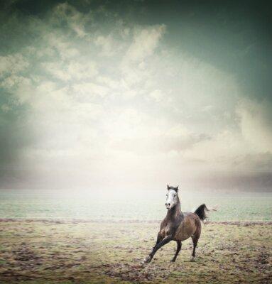 Poster Giovane cavallo in esecuzione su pascolo e lo sfondo del cielo, tonica