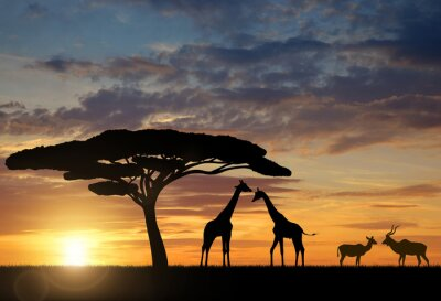 Poster Giraffe con Kudu al tramonto