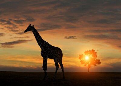 Poster Giraffe durante il tramonto africano