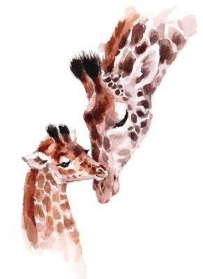 Poster Giraffe Madre e bambino Acquerello dipinto a mano illustrazione di animali selvatici isolato su sfondo bianco