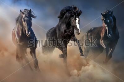 Poster Gli stalloni neri corrono al galoppo nella polvere del deserto contro il cielo drammatico