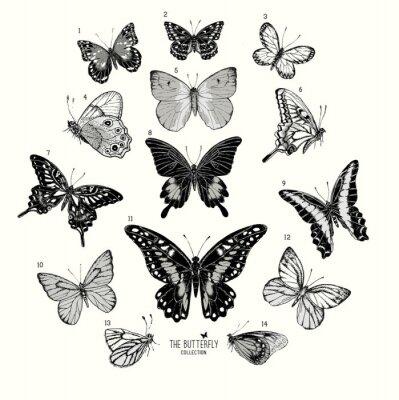 Poster Grande collezione di farfalle, set disegnata a mano isolated.Vector illustrazione