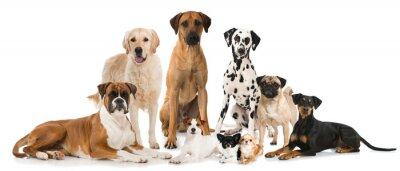 Poster Gruppe verschiedener Hunde - Gruppo di cani
