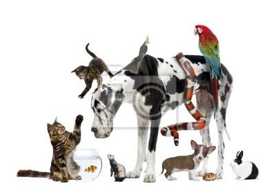 Gruppo Di Animali Domestici Insieme Di Fronte A Sfondo Bianco