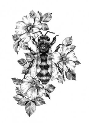 Poster Hand Drawn Monochrome Bee among  Dog Rose Flowers