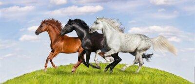 Poster I cavalli corrono galoppo sul verde pascolo contro bel cielo