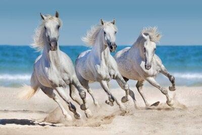 Poster I cavalli corrono lungo la costa