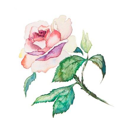 Poster i fiori di primavera acquerelli isolato su sfondo bianco