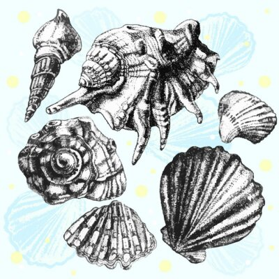 Poster illustration with different realistic shells